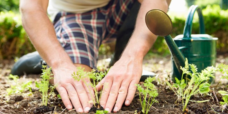 7 Useful Lawn Care Tips