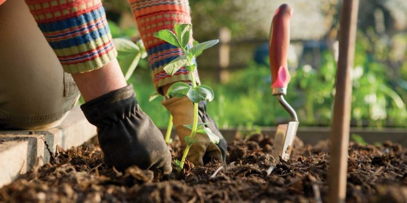 How To Create An Organic Garden In Your Home