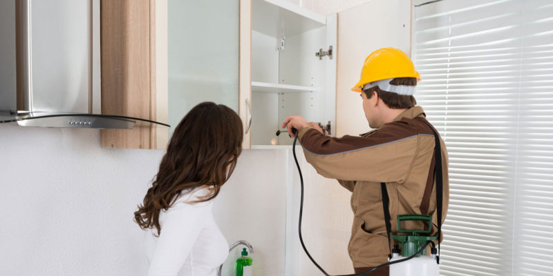 How to Choose The Right Pest Exterminators