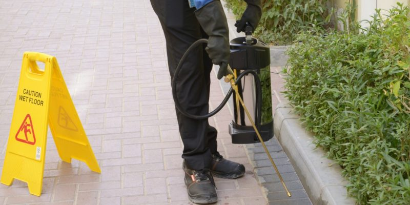 Pest Inspection Penrith Report on Types of Pest Infestation