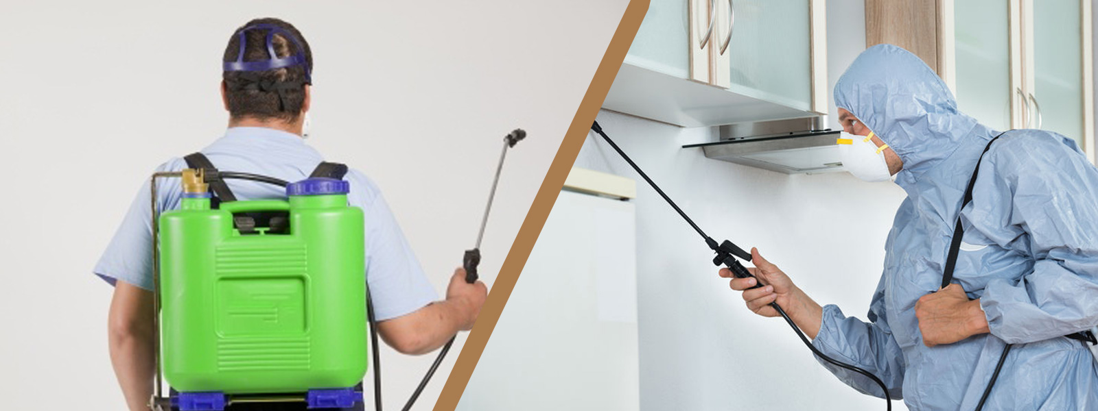 Search For The Perfect Pest Control Gold Coast